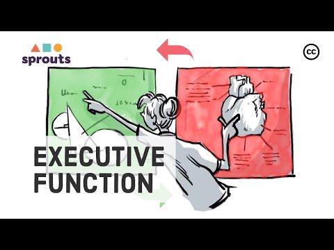 Executive Function: Brain's Control Center