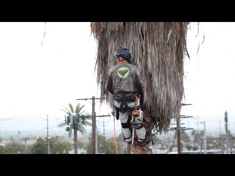 Preventing Palm Tree Trimmer Fatalities