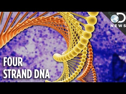 What Is 4-Strand DNA & Why Are Scientists So Excited?