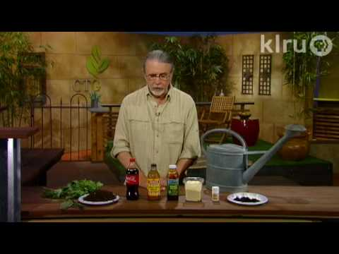 John Dromgoole homemade fertilizers & fungicides: Central Texas Gardener