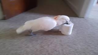 I Must Kill The Evil Toilet Paper Roll!!