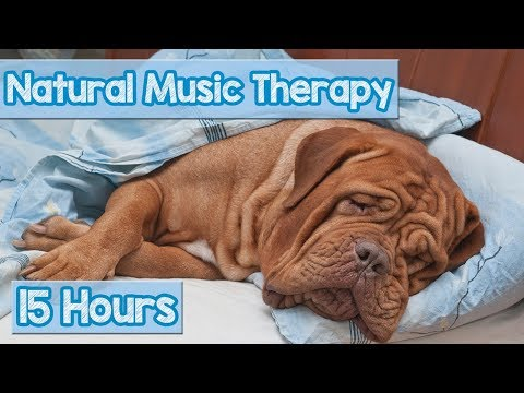 How to Calm My Dog? Pet Therapy Music to reduce Puppy Anxiety - Helped 4 million dogs ( New 2018) 🐕💤
