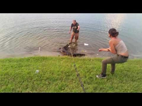 Cathing a gator in ruskin florida