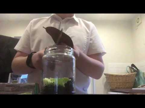 How to make a habitat for woodlice