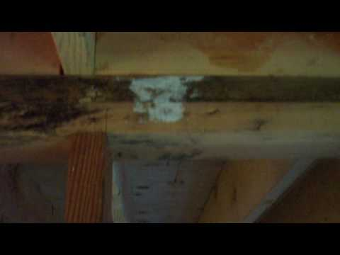Mildew on New Construction Lumber - Moist Wood and Home Building Problems