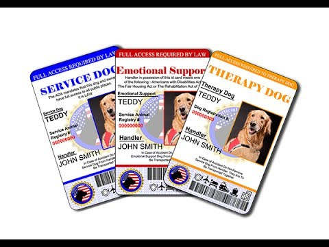 Benefits of a Service Dog ID for daily use
