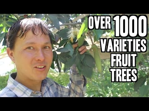 Rare Fruit Tree Nursery in California sells over 1000 Varieties