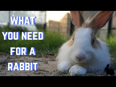 WHAT YOU NEED FOR A RABBIT!