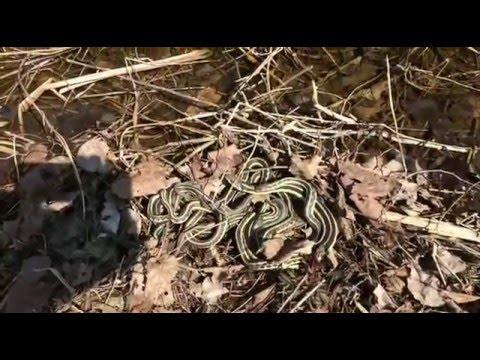 Jumble of Snakes