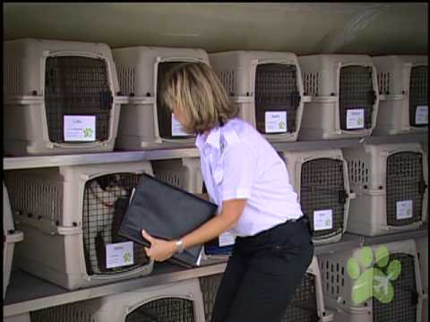 What is Pet Airways?
