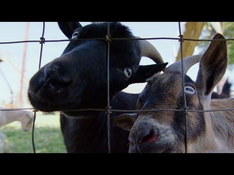 GPS: Goat Positioning System