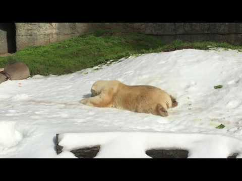 Polar Bear Snow Day