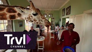 Dine With Giraffes at Giraffe Manor - Travel Channel
