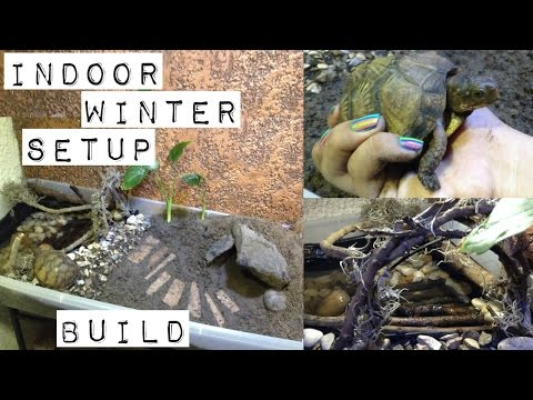 three toed box turtle indoor winter setup build