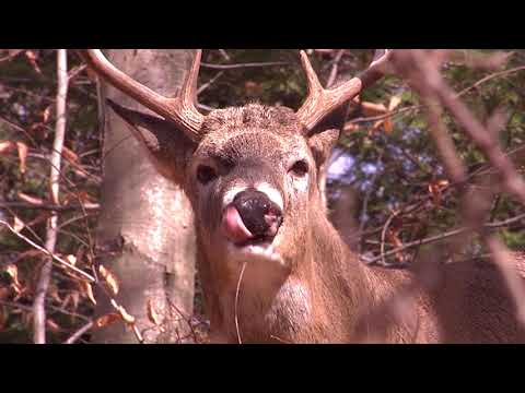 Buck Hunting Tips for Pressured Land Deer Hunters