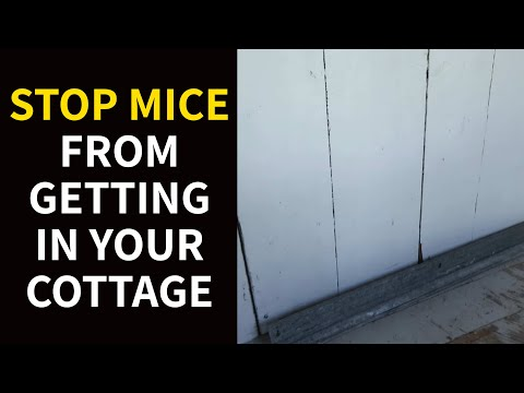 Stop Mice from Getting in Your Cottage