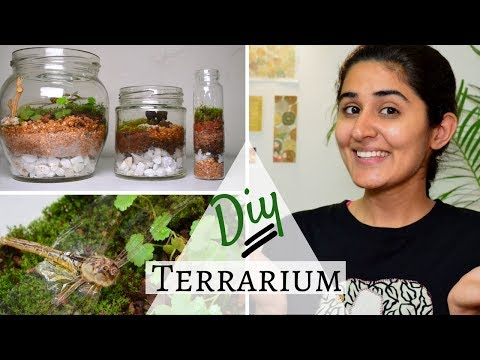 How to Make a Terrarium for Free 💚