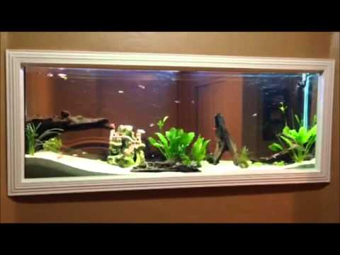 DIY - Wall built in Fish tank 150gl aquarium freshwater set up