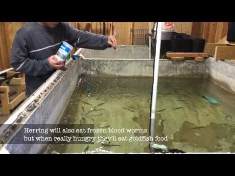 How to keep bait fish alive at home