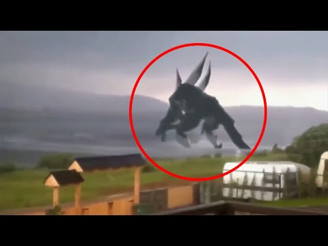 19 Mysterious Sea Creatures Caught on Tape