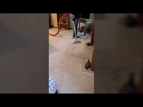 Removing oily soot spots from carpet with Saiger's