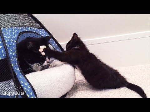 Killing feral cats is not the solution, and here's proof! TinyKittens.com