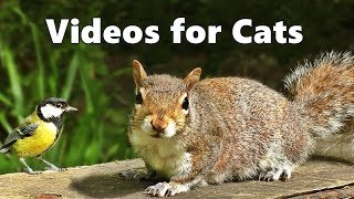 Videos for Cats to Watch - Squirrels and Birds Spectacular