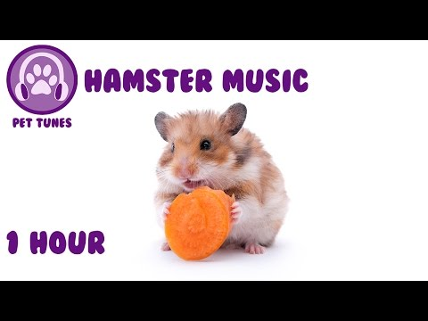 Music for Hamsters. Relax Your Pet Hamster with Calming Tunes from Pet Tunes.