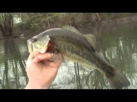 Bass,Perch,Bluegill and Bullhead!