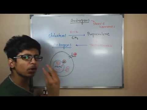 Androgens | testosterone hormone
