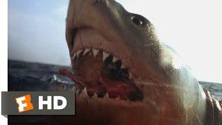 Jaws: The Revenge (3/8) Movie CLIP - You Got