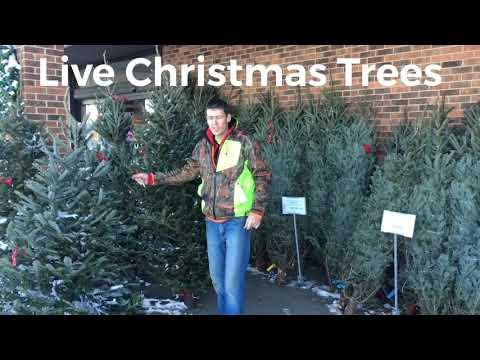 Live Christmas trees.