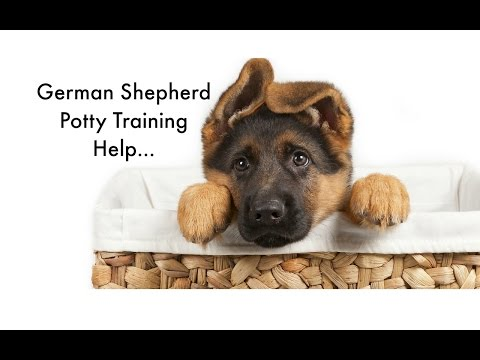 Potty Training your German Shepherd Puppy 6 German Shepherd Housebreaking Tips Puppy Potty Training
