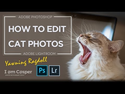 How to Edit Cat Photos in Photoshop & Lightroom CC - Tutorial Amazing Cat Pictures