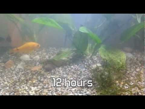 Cloudy water in fish tank / Aquarium over 48 hours