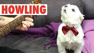 Howling Howlers   Funny Pet Video Compilation