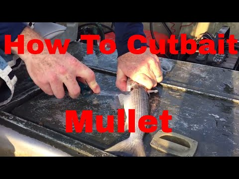 How to cut bait large mullet for fishing!!