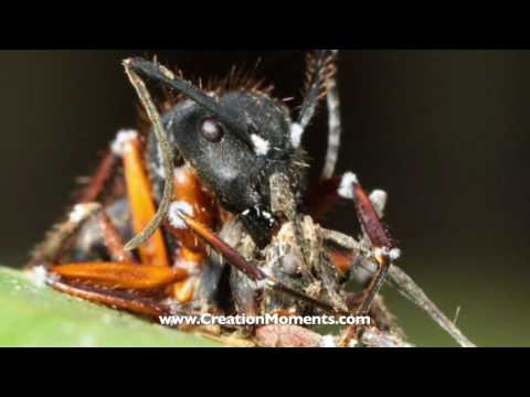 Night Of The Living Zombie Ant!