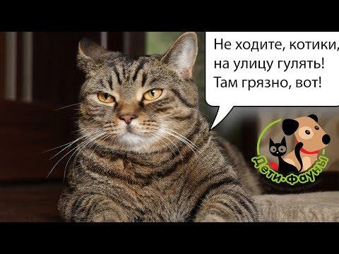 Нужно ли выгуливать домашнюю кошку на улице?