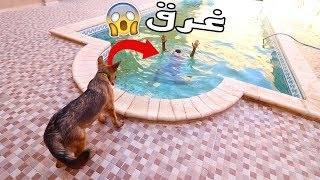 شوفو ردت فعل كلب لما شاف صاحبو يغرق | مقلب الغرق