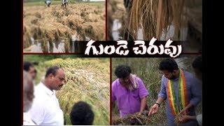 Heavy Rain Causes Crop loss in Krishana , Srikakulam Districts