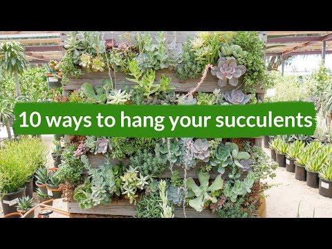 10 Ways To Hang Your Succulents / Joy Us Garden