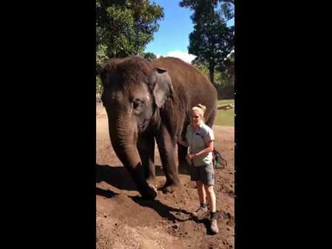 Why I love Auckland Zoo - Elephant keeper Jade