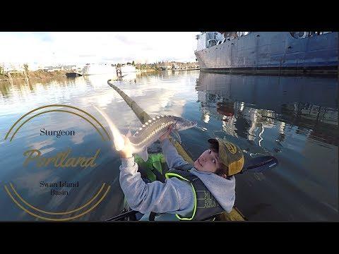 Kayak Fishing: Sturgeon On The Willamette