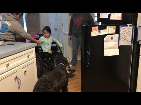Service Dog Opening a Refrigerator
