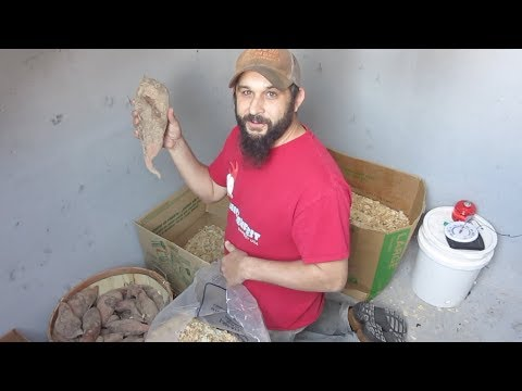 Best Way to Store Potatoes in the Root Cellar/Storm Shelter