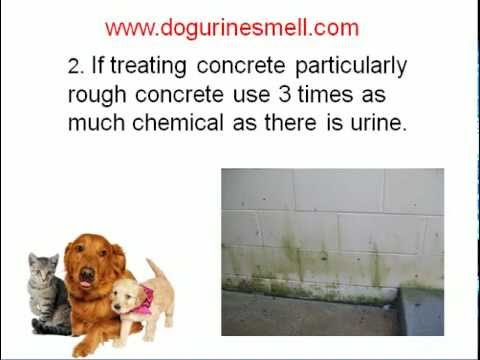 Dog Urine Smell Removal Tips