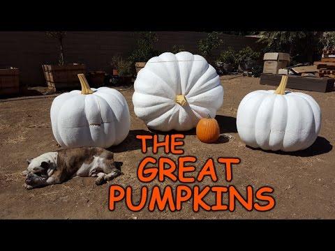 Carving Giant Pumpkins - Sculpting Foam Props & Decorations