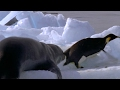 Leopard Seal Kills Emperor Penguin | Blue Planet | BBC Earth