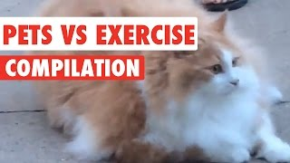 Pets Vs Exercise Video Compilation 2017